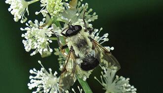 xtra man thành phần keo ong xanh